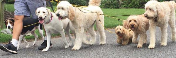dog walking photo