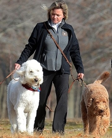 Bo and Buddy pet walking