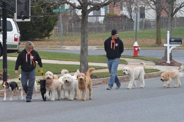 dog walking business photo